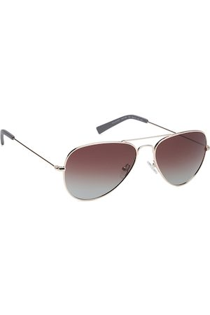 Nautica Men Brown Lens & Gold-Toned Aviator Sunglasses with UV Protection