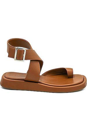 GIA/RHW Flat Toe Ring Wrap Sandal in Rustic